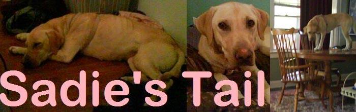 Sadie's Tail