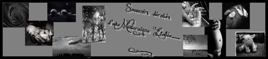 Souvenirs dérobés d'une Musaraigne Etoilée...