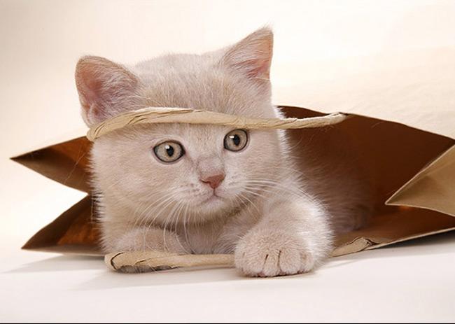 Sobat Ketawa Setanah Air Indonesia Suka Kucing Enggak