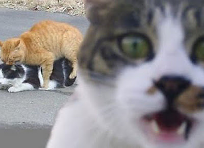 Animal Photobombers Seen On www.coolpicturegallery.us