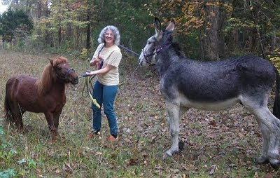 miniature horse and donkey on a walk