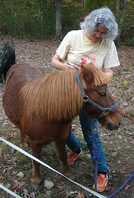 superman the miniature horse and me