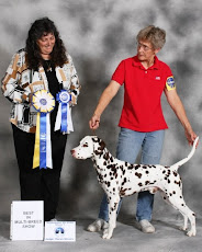 Argus's UKC Best In Show