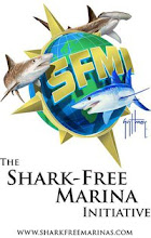 Shark-Free Marina