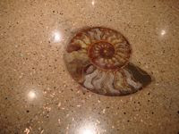 fossil inlay