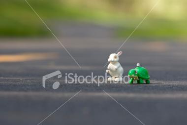 [turtle]