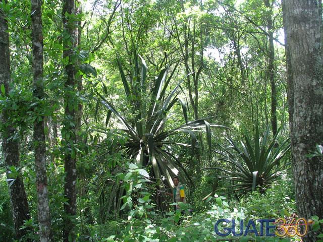 las plantas de la selva