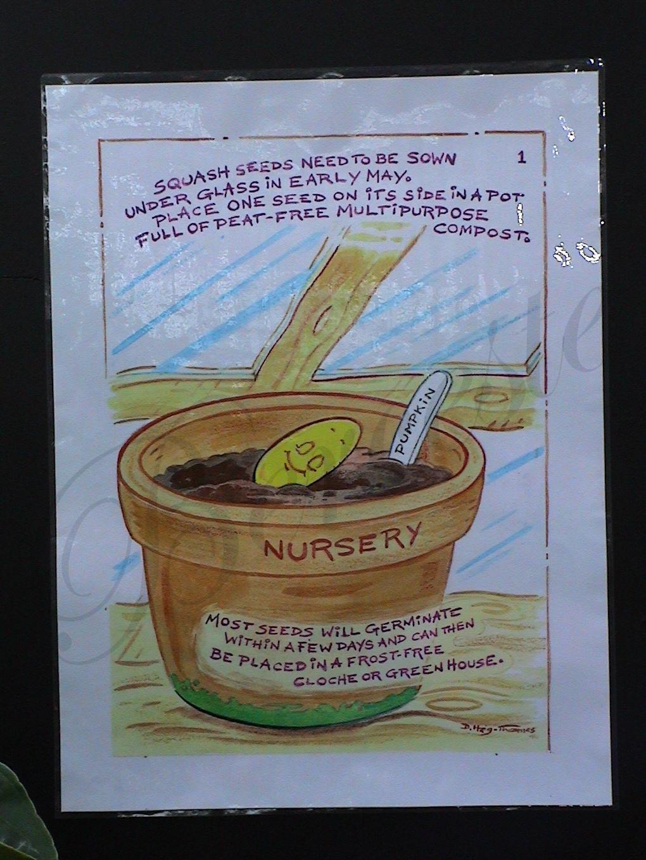 Bir kabaktan el işleri veya Turuncu bir bitkinin başka bir hayatı