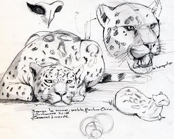 Arte y Conservacin Journal Bocetos en el Zoo los Ocarros