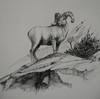 big horn sheep pen amp  ink