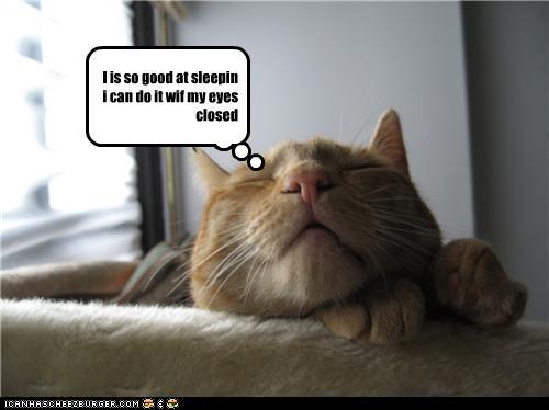 cat sleep lol