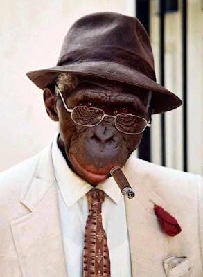 Monkey looking smart
