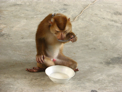 Monkey eats soup