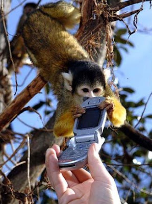 monkey and a cell phone