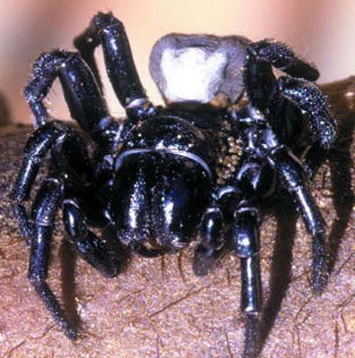 The Most Disturbing Animals On Earth