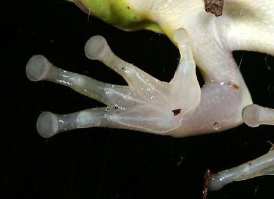 The Beautiful Complexity of Animal Hands
