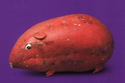 Guinea Pig Sweet Potato