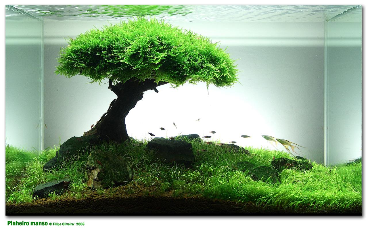 Canal 13 dicas para fazer um aqu rio de gua doce for Garden aquarium design
