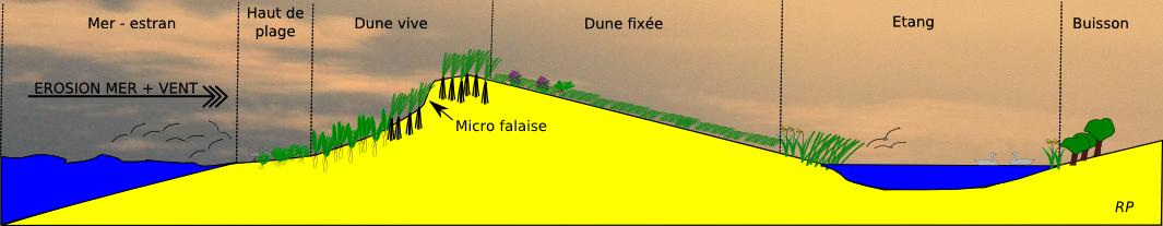 Profil de la dune.