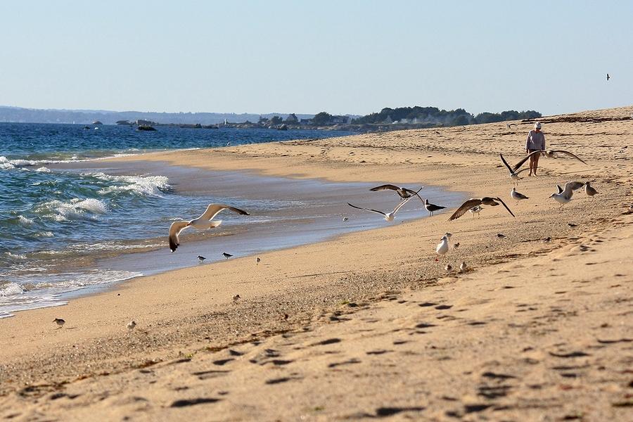 Oiseau sur la plage.