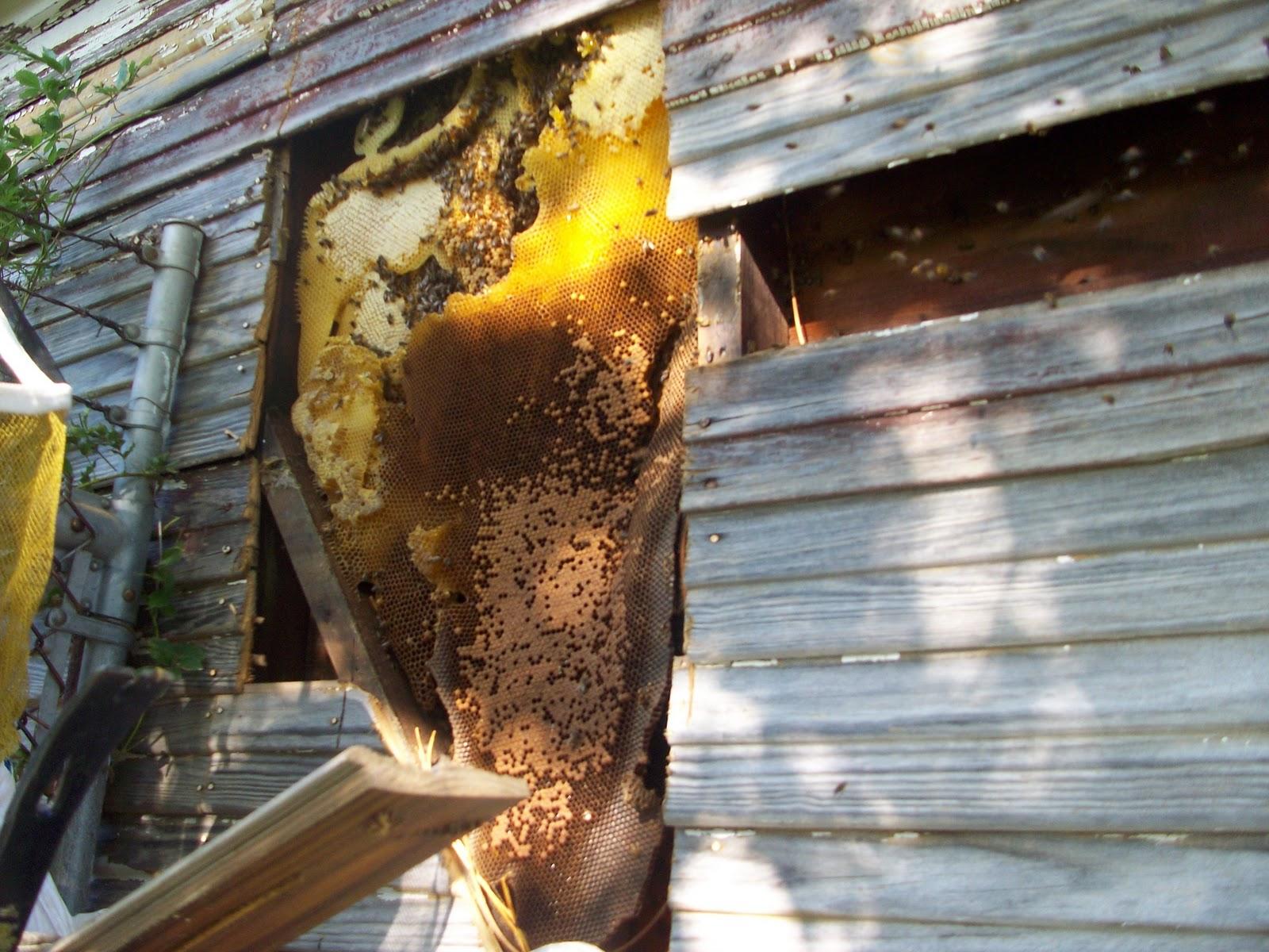 Лечение укусами пчел в домашних условиях, отзыв на 46