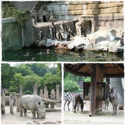 hvorfor kommer til Odense Zoo