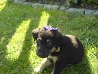 Sa cvetnom kapicom
