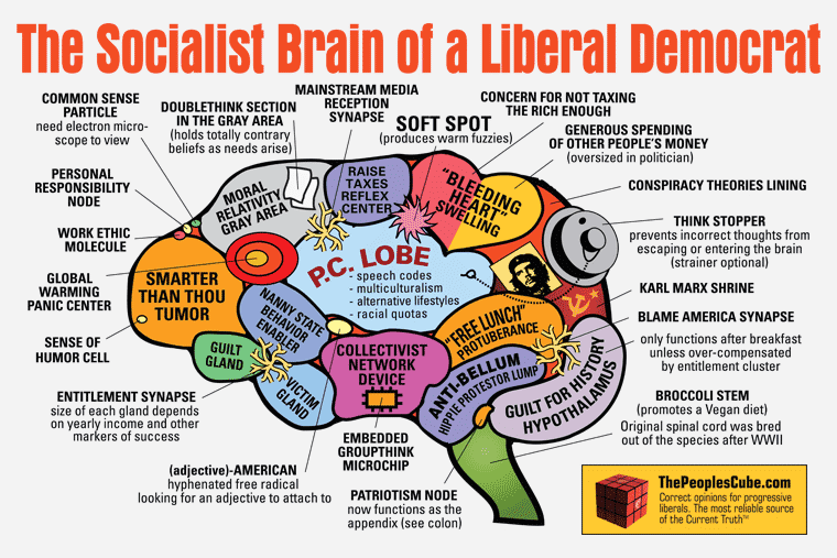 liberals frontal lobes