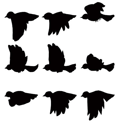 Bird animation frames - naturalhairvitamins.info