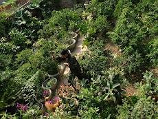 Vườn tĩnh tâm