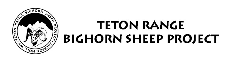 Teton Bighorn Sheep Project