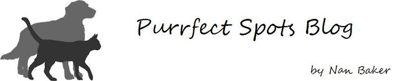 Purrfect Spots