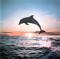 lovina beach dolphin