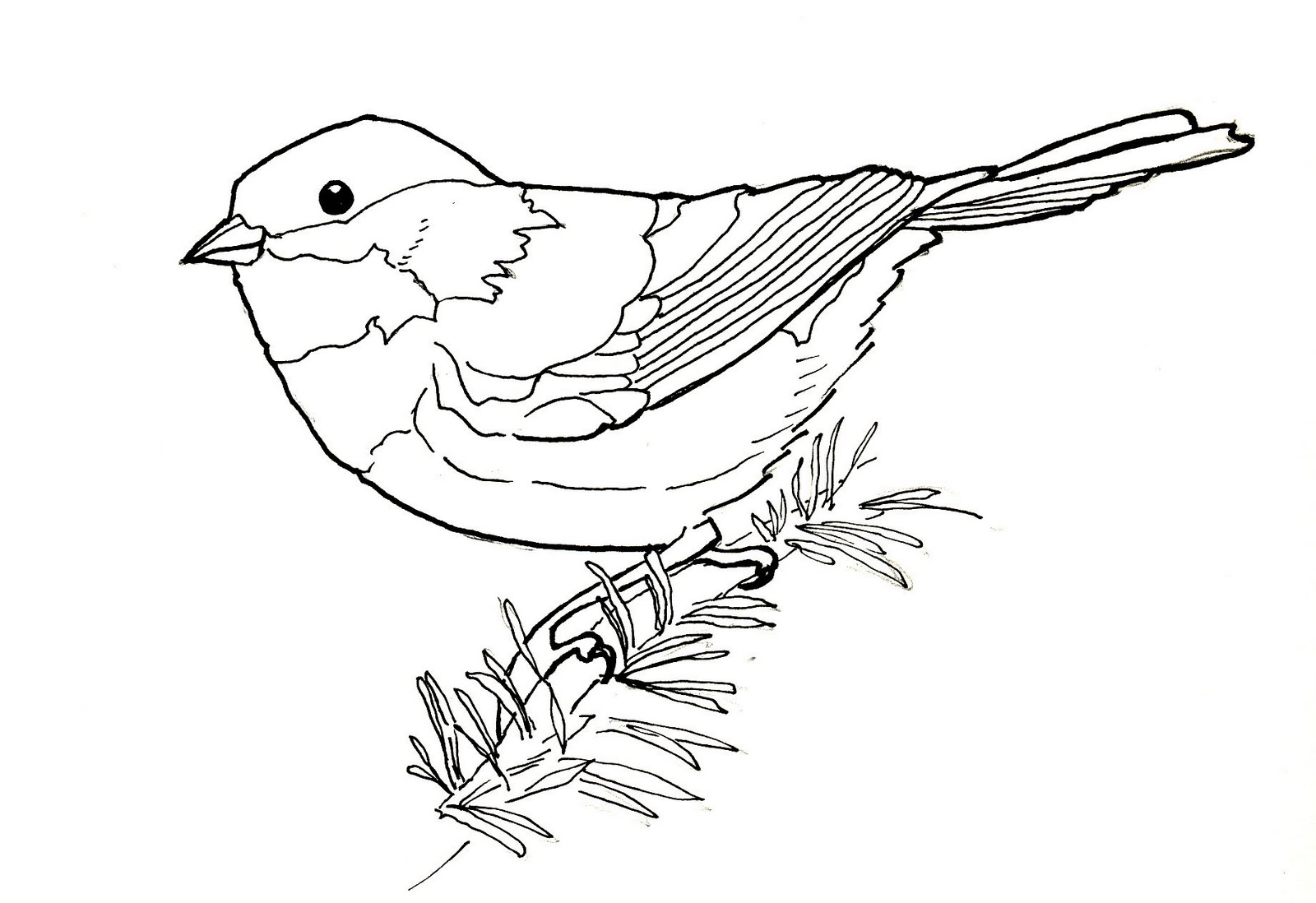 Line Art Birds : Birdly drawn january