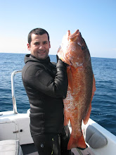 Corvina Real