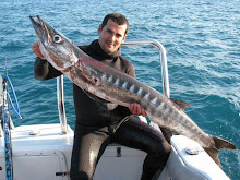 Barracuda Gigante