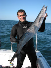 Barracuda de Cauda Preta