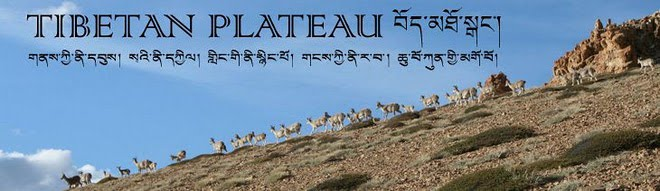The Tibetan Plateau Blog