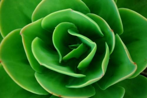 Fleur III