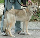 Elja von der Wolfsranch