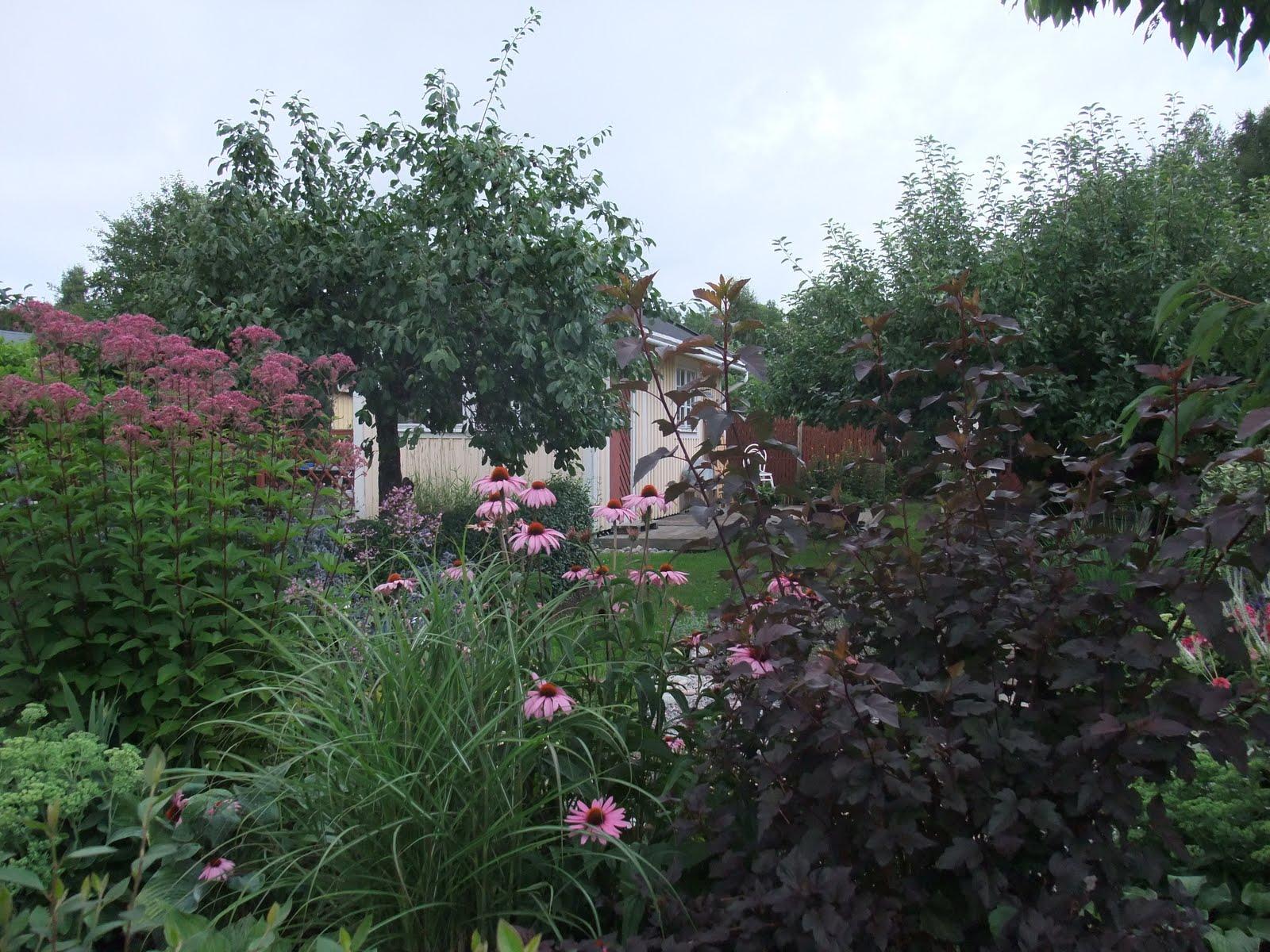 Stenhalls trädgård: augusti 2010