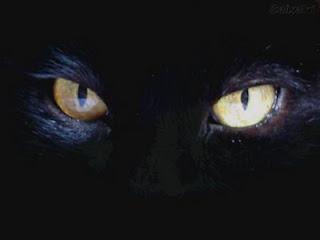 [olhos+de+gato.jpg]
