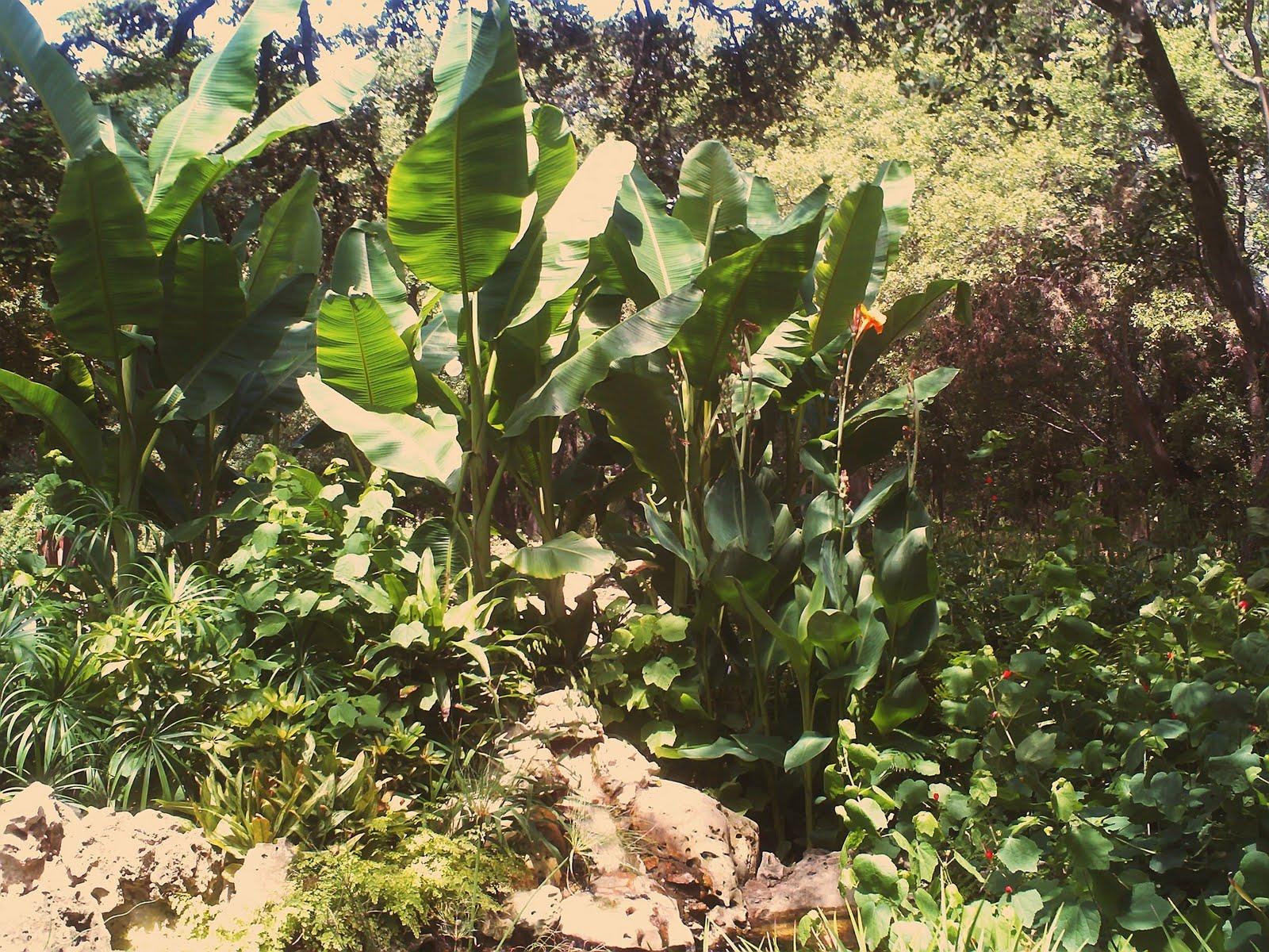 Contemporary Zilker Botanical Garden Vignette - Beautiful Garden ...