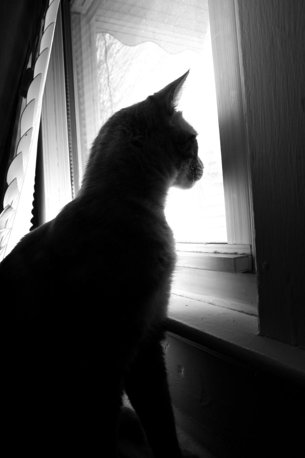 Gatos Sin Guantes Gato En La Ventana