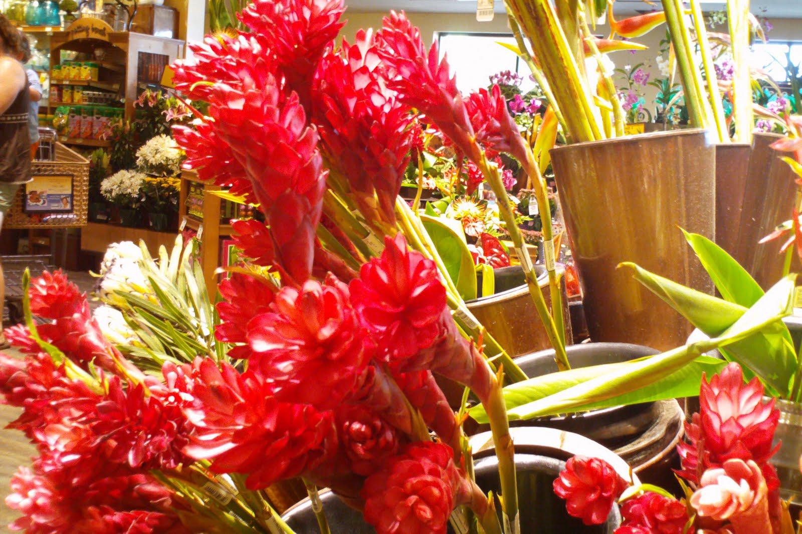 Aloha Maui Maui Flora