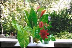Flora e Fauna.