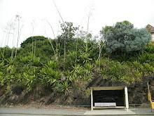 SLOPE PLANTING
