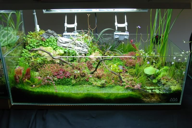 My g rdening frenzy planted tank terrarium for Fish tank terrarium