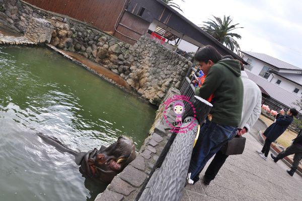 http://4.bp.blogspot.com/_c3es7FyunLI/TTkld0lhhtI/AAAAAAAAJ-o/J0S612eSSUM/s1600/DSC_0190.JPG