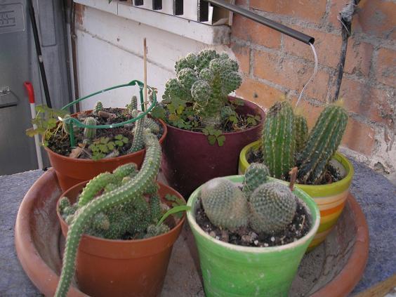 El jardin de pepa plantas de interior y cactus - Plantas de frio y calor ...